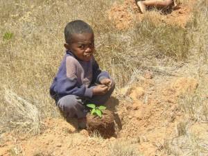 Il va planter son arbre